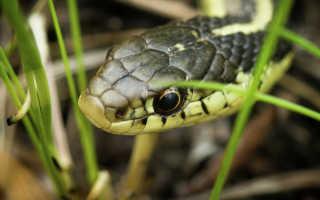 Что делать, если укусила змея: правила первой помощи и опасные ошибки