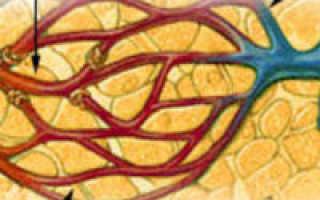 Артериальная и венозная гиперемии