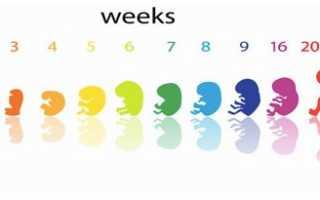 Сколько недель длится беременность от зачатия и до родов