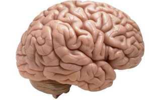Воспаление головного мозга — энцефалит