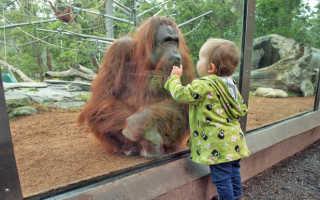 Словесные дидактические игры для малышей: весело, познавательно и полезно