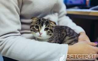 Насморк у кошек — лечение
