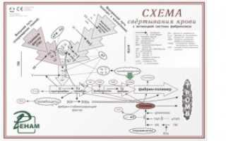 Фактор свертываемости крови 13, субъединица A1 (F13A1)