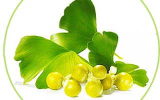 Полезные свойства пищевой добавки Гинкго Билоба