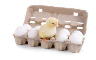 Когда можно давать ребенку яйцо