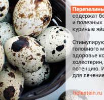 Можно ли есть перепелиные яйца при повышенном холестерине