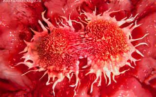 Тромбоциты — их роль в организме и чем грозит отклонение от нормы (повышение или понижение тромбоцитов)