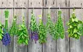Фитогормоны при климаксе: в каких растениях и медикаментах они содержатся и как их применять