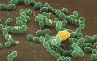 Применение Левофлоксацина при бронхите и других болезнях лор-органов
