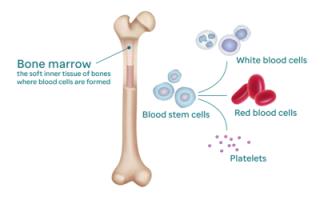 Гистологическое исследование: когда оно назначается, как проводится и что показывает