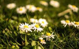 Лечим салом: топ-5 популярных и эффективных народных средства от подагры