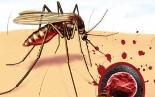 Малярия и ее профилактика